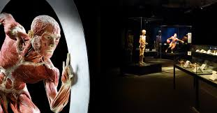 London and South East Regional Meeting: Body Worlds museum featured image